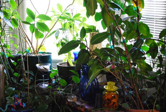 plantsgreem