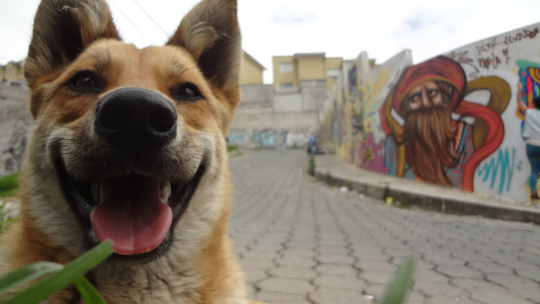 Ecuador Dog